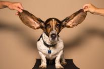 Mejorar tu comprensión auditiva del lenguaje